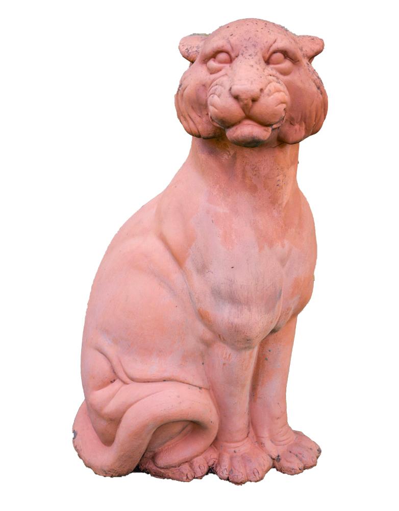 Puma in Cotto
